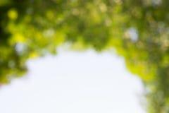 Onduidelijk beeld groene bladeren en takken Natuurlijke achtergrond Stock Afbeeldingen