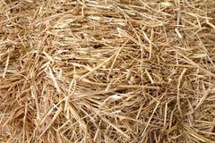 Onduidelijk beeld van Droog gras Royalty-vrije Stock Foto