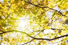 Onduidelijk beeld van gele bladeren Stock Afbeeldingen
