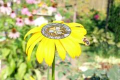 Ondulación de la moneda dentro de la flor Fotografía de archivo libre de regalías