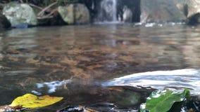 Ondulación en el agua Imagenes de archivo
