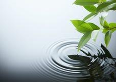 Ondulación y hoja del agua Fotos de archivo