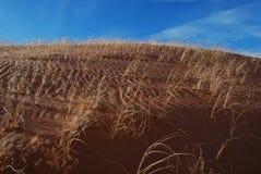 Ondulaciones de la hierba de la duna de arena Fotografía de archivo libre de regalías