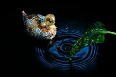 Ondulaciones de oro del pato y del agua Fotografía de archivo