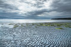 Ondulaciones y alga marina en la playa arenosa durante la bajamar por la tarde con las nubes de tormenta dramáticas en cielo imagen de archivo