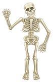 ondulation de squelette de bande dessinée Images libres de droits