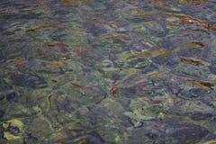 Ondulations colorées de l'eau Photo libre de droits