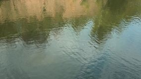 Ondulations de l'eau sur la rivière Réflexion des arbres dans le lac banque de vidéos