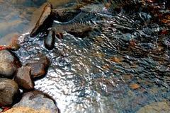Ondulazioni del fiume Immagini Stock Libere da Diritti