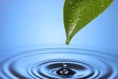 Ondulazioni del foglio di goccia dell'acqua Fotografie Stock Libere da Diritti