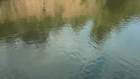 Ondulazioni dell'acqua sul fiume Riflessione degli alberi nel lago video d archivio