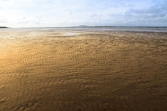 Ondulazioni dorate della sabbia Fotografia Stock