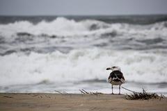 Ondule les agains se brisants le rivage tandis que la mouette regarde dessus Photographie stock