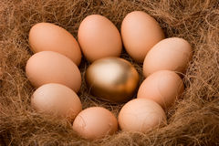 One between all. One golden egg between nine ordinary egg in nest, describing special person among the other or any metaphors that fit. Be different Stock Image