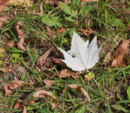 One alone white leaf. Royalty Free Stock Photography