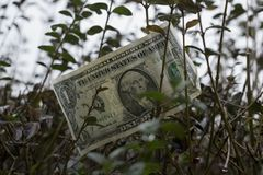 One american dollar on the tree royalty free stock photos