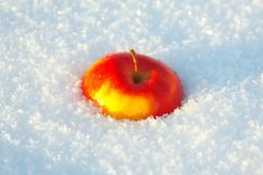 One apple in the snow Royalty Free Stock Photography