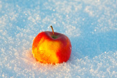 One apple in the snow Royalty Free Stock Images