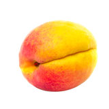 One apricot Stock Image