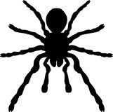One arachnid isolated. Royalty Free Stock Photos