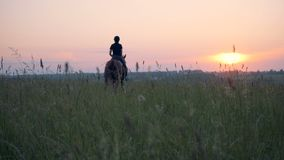 A woman gallops on a horse. One athlete rides a horse in a field, galloping.