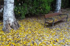 One autumn day falling leaves on the seat royalty free stock photography
