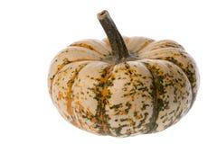 One Autumn Gourd royalty free stock photo