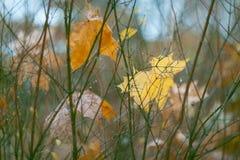 One autumn rainy day. Autumn leaf gets wet under the rain Royalty Free Stock Photography