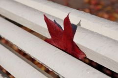 One autumn red leaf Royalty Free Stock Photography
