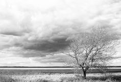 One autumn tree in agricultural black and white landscape Royalty Free Stock Photography