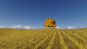 One autumn tree on yellow field. And blue sky stock footage