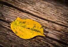 One autumn yellow leaves Stock Photo