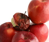 One bad apple spoils the whole bunch Royalty Free Stock Images
