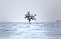 One bare tree in winter. One bare tree surrounded by snow and grey sky Stock Photos