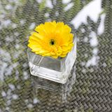 One beautiful flower in glass vase on coffee table Royalty Free Stock Photos