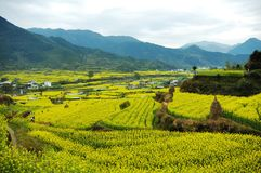 One Beautiful Village just like a picture. Wuyuan, the beautiful village of Chian, the yellow cauliflower grows anywhere at Spring stock photography