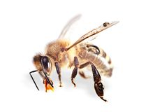 One bee Stock Photos