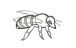 One bee Royalty Free Stock Photos