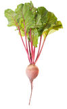 One Beet Root Stock Photo