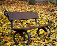One bench with autumn dry leaves Stock Photos