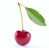 One berry cherries Stock Images