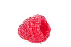 One berry of a raspberry Stock Images
