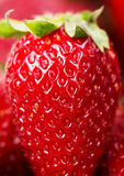 One berry strawberry Royalty Free Stock Photography
