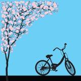 One bicycle parking under blooming full bloom pink sakura tree Cherry blossom. Flower shadow black wood bark backdrop, silhouette floral vintage banner, travel stock illustration