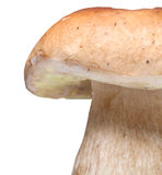 Big cep Royalty Free Stock Images