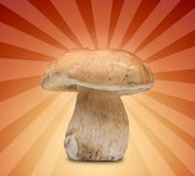 Big cep on gradient background Stock Images