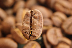 One big coffee bean in focus Stock Photography