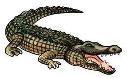One Big Crocodile Stock Photography
