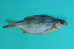 One big dried fish on a green table stock image
