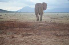 One big elephant , Kenya. Elephant in The Savana of the Tsavo National Park, Kenya ,Africa Royalty Free Stock Photos